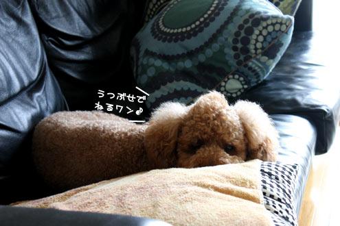 犬,いびき,呼吸困難