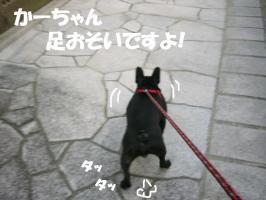 20061016110327.jpg