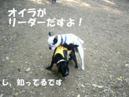 20061107143930.jpg