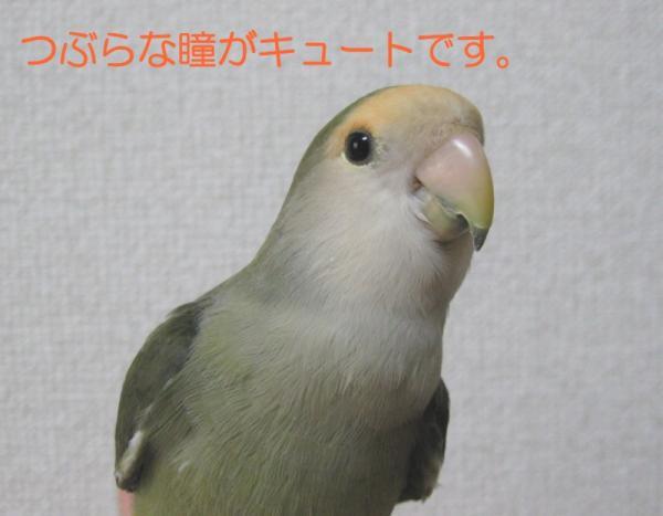 IMG_0379 あ3