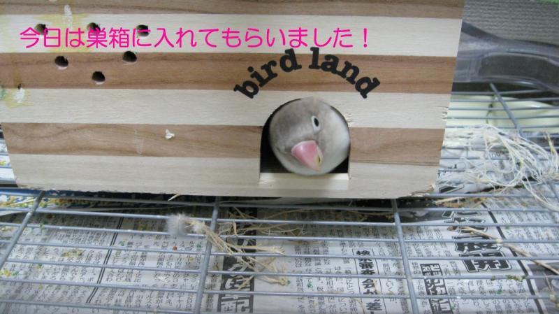 IMG_0553 しろた 巣箱