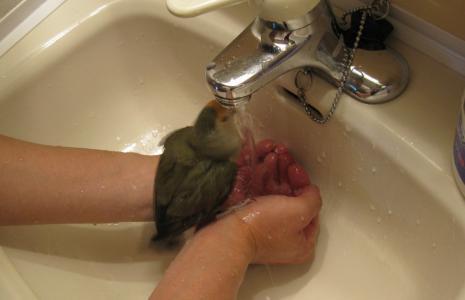 あいちゃん 水浴び1