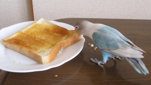 しろたとトースト1