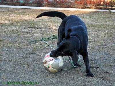 最後のサッカー