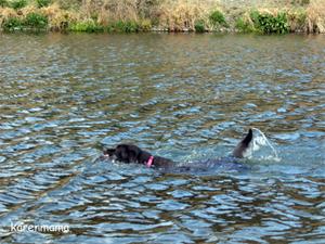 泳ぐカレン2
