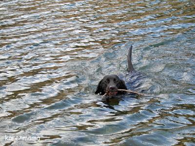 泳ぐカレン3