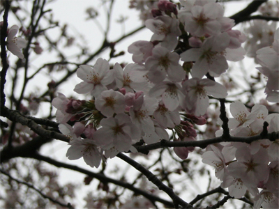 お花見オフ会16
