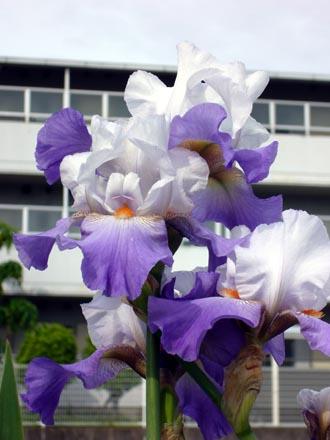 家の前に咲いてた花