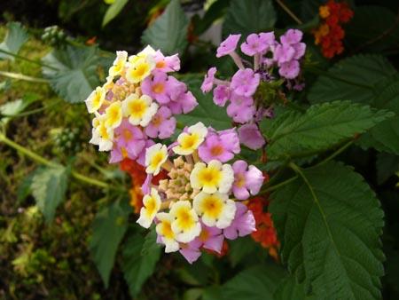 本屋の隣に咲いてた花1