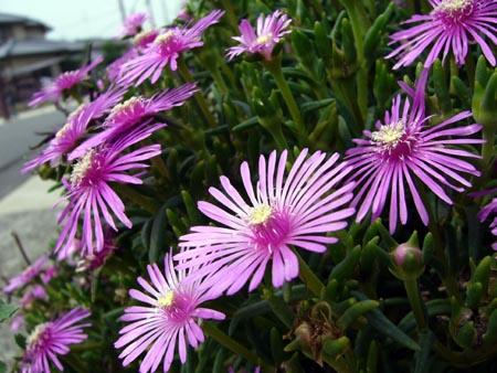 公園横の道端に咲いてた花2