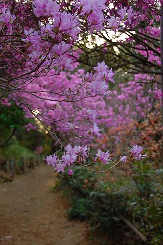 a private garden