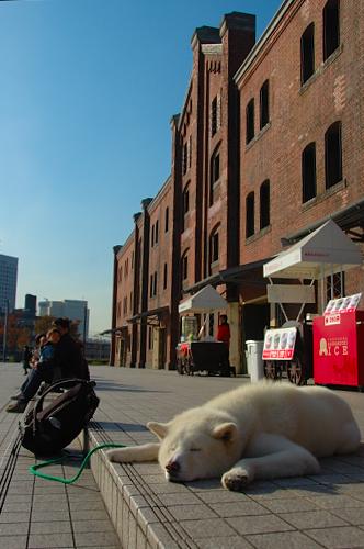 redbrickdog.jpg