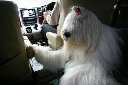 車内でくつろぐウィンク
