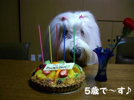 ウィンク5歳誕生日