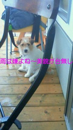 NEC_0157_20090721091315.jpg