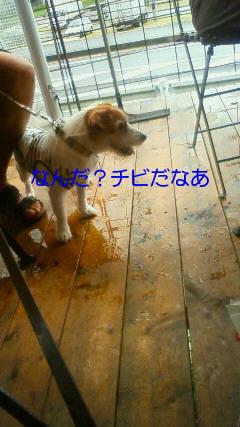 NEC_0161_20090721091433.jpg