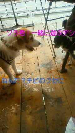 NEC_0162_20090721091433.jpg