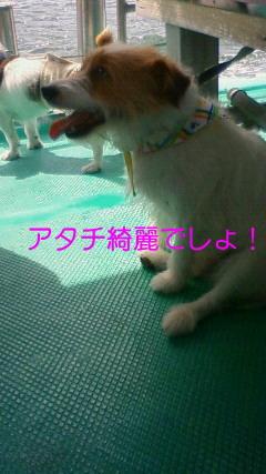 NEC_0163_20090721091434.jpg
