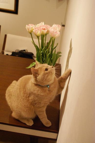 お花とボク。