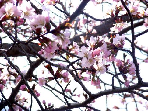 04_spring1.jpg