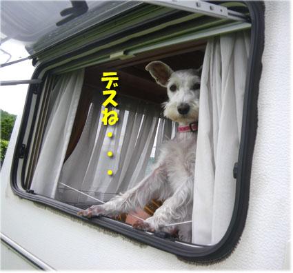 06_shima02.jpg
