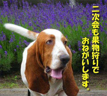07_cherry06.jpg