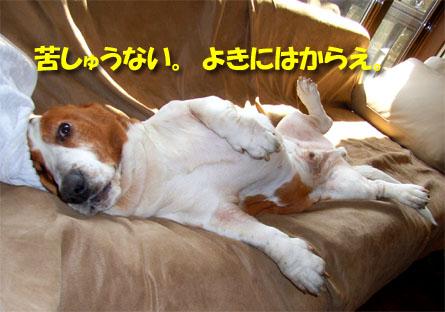 0904_niseko10.jpg