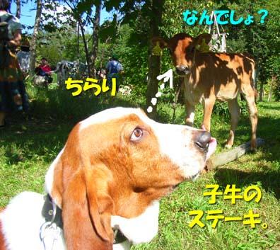 2008_09_toya01.jpg