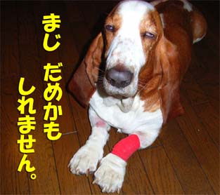 2008_10_better0.jpg