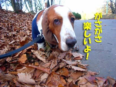 2008_10_better01.jpg