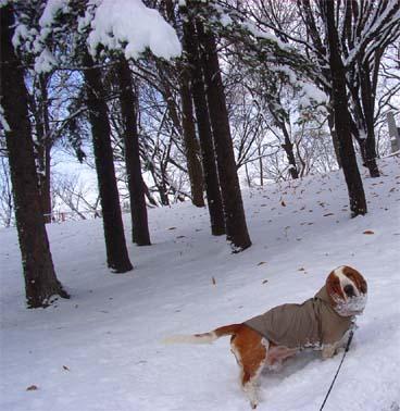 2008_11_snow1.jpg