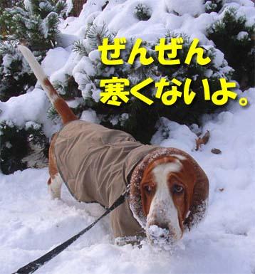 2008_11_snow2.jpg