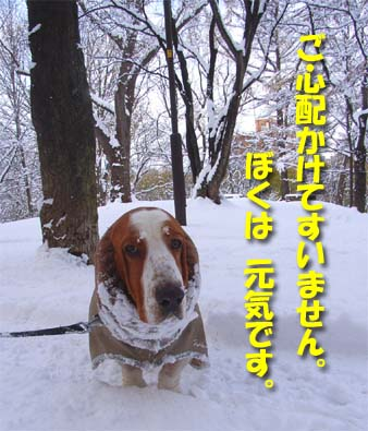 2008_11_snow3.jpg