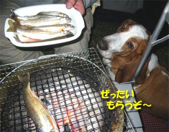 2009_05_gw16.jpg