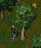 Lumberjack1.jpg