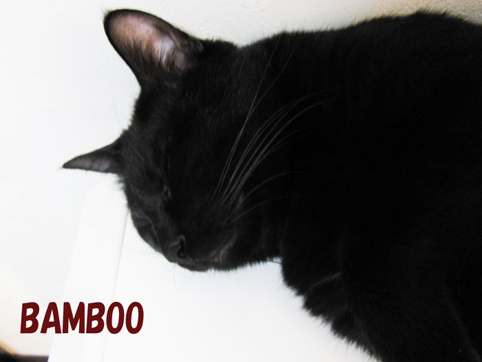CIMG4846.jpg