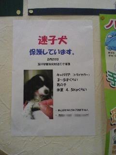 080223迷子犬