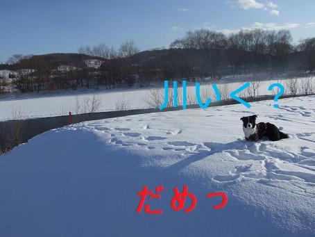 dog20080206 033