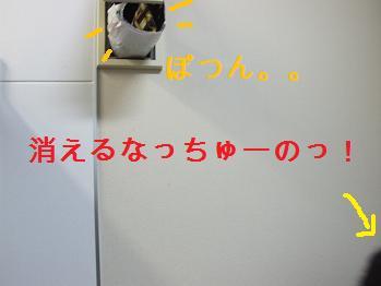 dog20080206 003