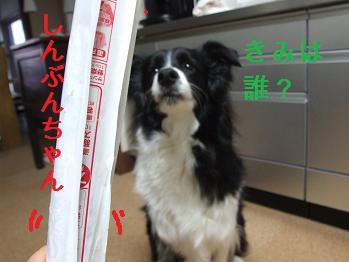 dog20080206 005