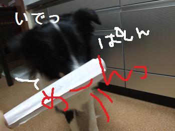dog20080206 007