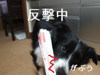 dog20080206 006