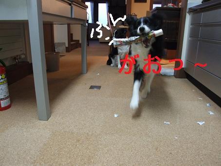 dog20080206 015