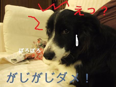 dog20080206 022
