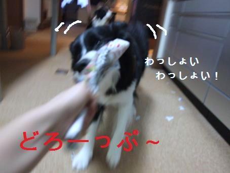 dog20080206 018
