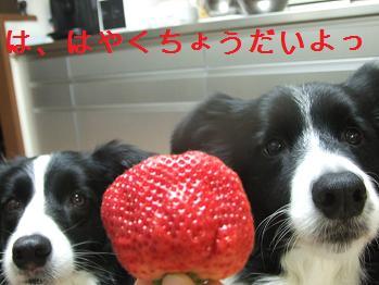 dog20080212 008