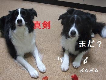 dog20080212 009