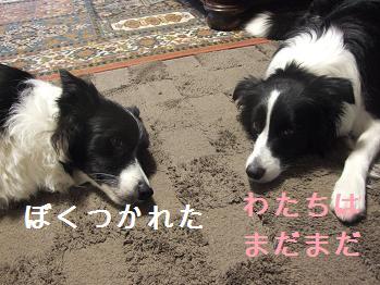 dog20080215 012