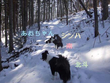 dog20080219 003