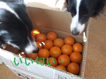 dog20080220 002